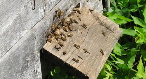 Mesilased lahedalt
